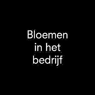 Bloemen in het bedrijf | Julian Knol - Bloemist Apeldoorn