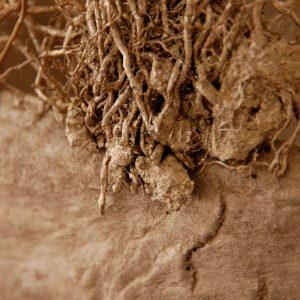 Detail - Schaal van vlas