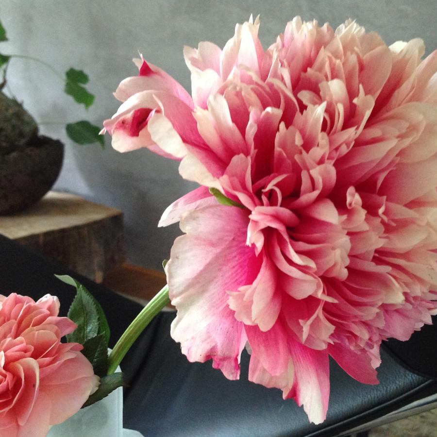 Bloemen in je huis | Detail Pioenroos - Bloemen in je huis