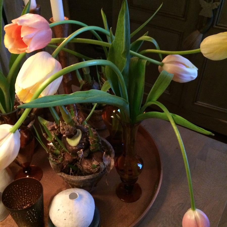 Bloemen in je huis | Tulpen op de vaas - Bloemen in je huis